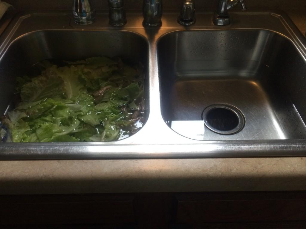 make spring lettuce last longer