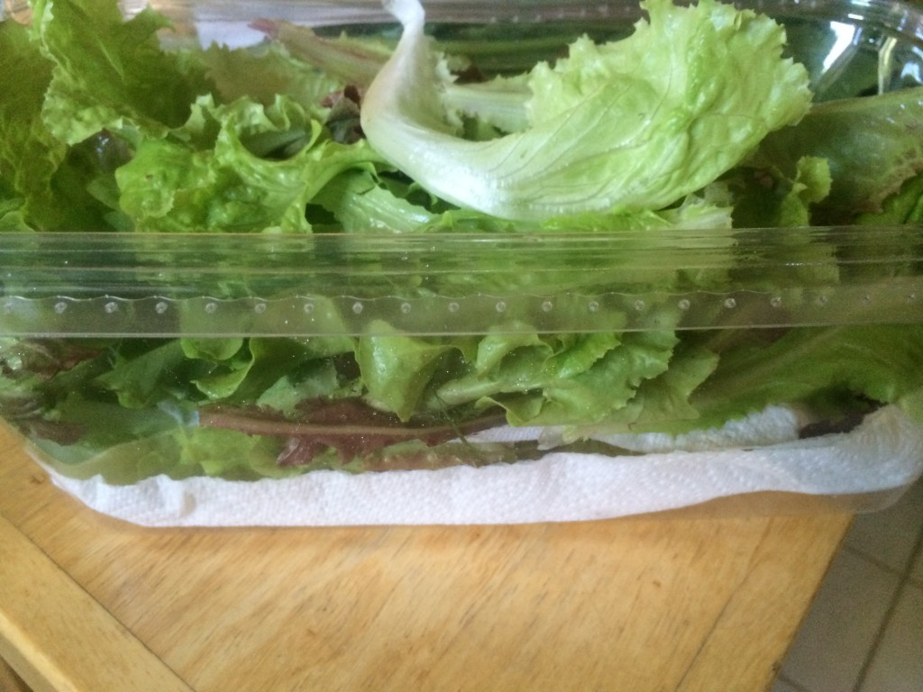 early spring lettuce from container garden