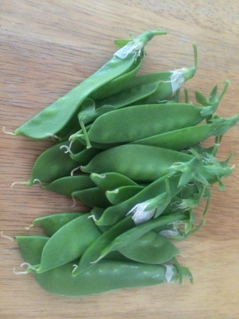 Companion Planting Works Peas