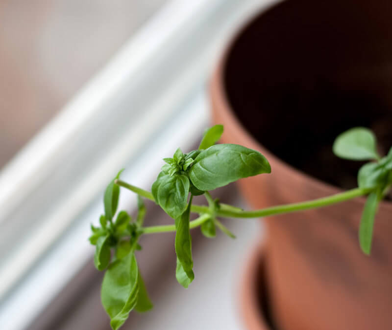 How To Grow Herbs | Window Sill Gardening Part 1
