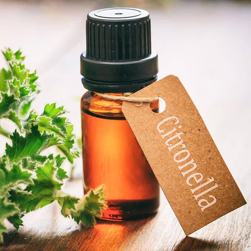 Essential Oil Bug Repellent DIY Recipe