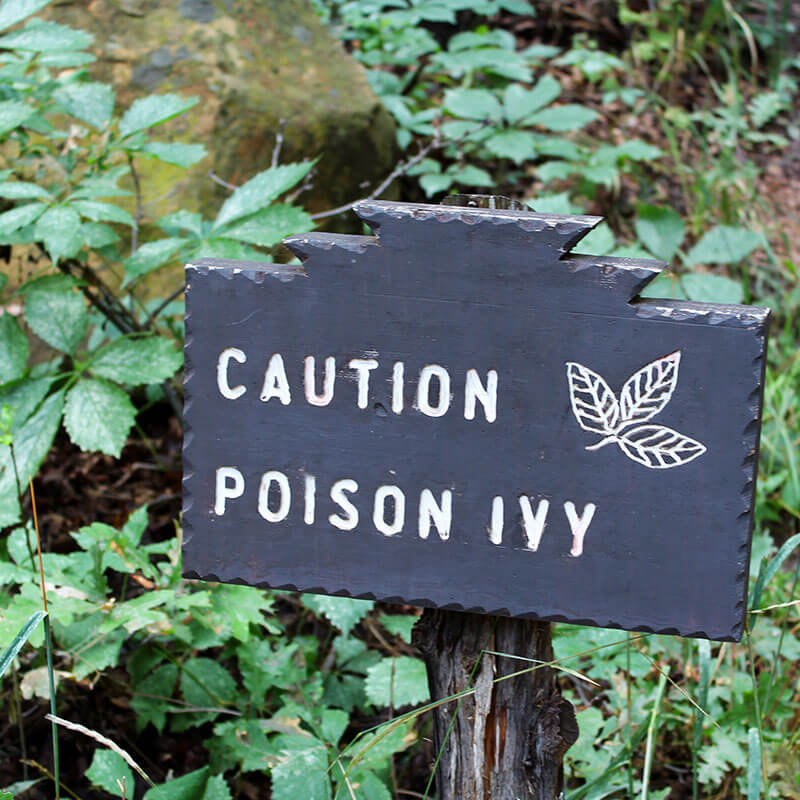 Essential Oils for Poison Ivy Treatment Recipe
