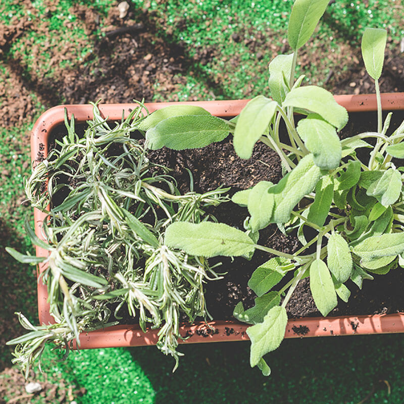 Mixing Nutritious Dirt for the Garden