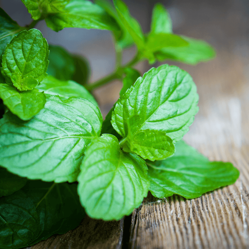 DIY Essential Oil Protocol for Gut Health