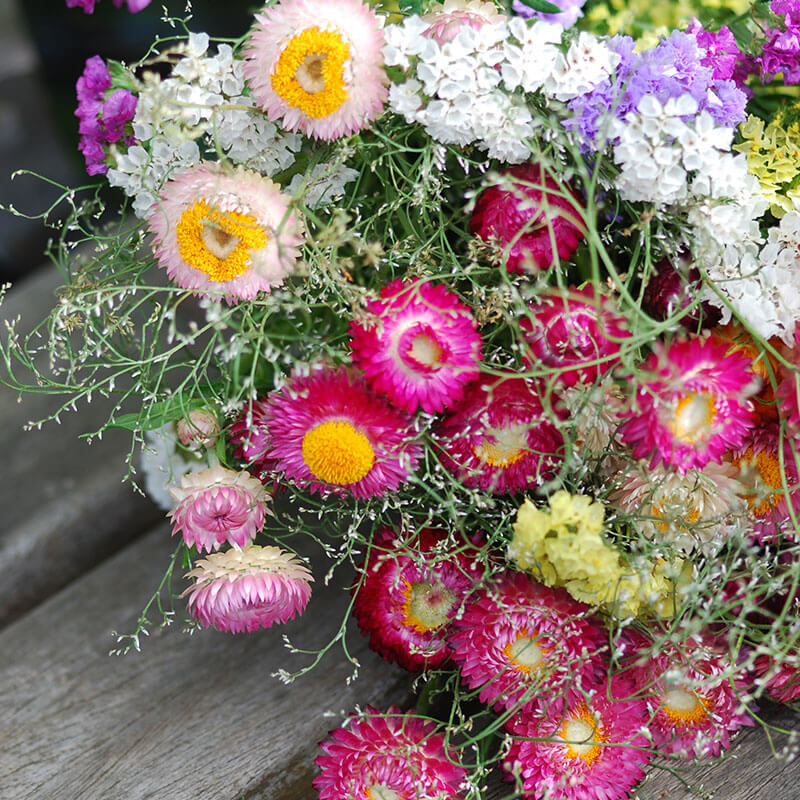 Helichrysum Essential Oil Uses: The Fountain of Youth