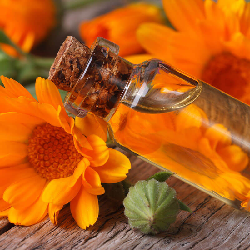 Calendula Uses & Benefits: Calm, Soothe and Heal