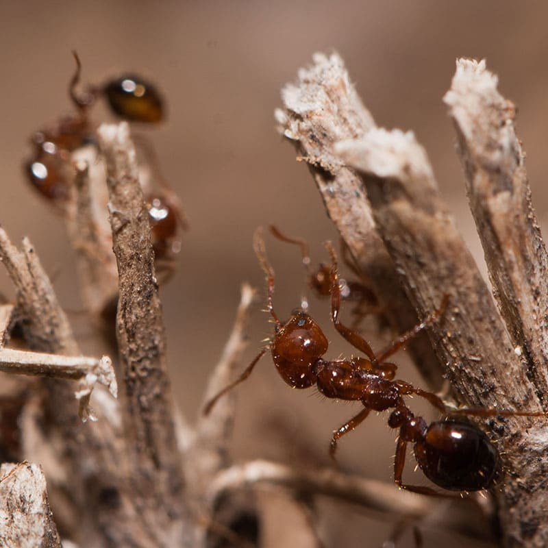 Essential Oil Ant and Wasp Killer