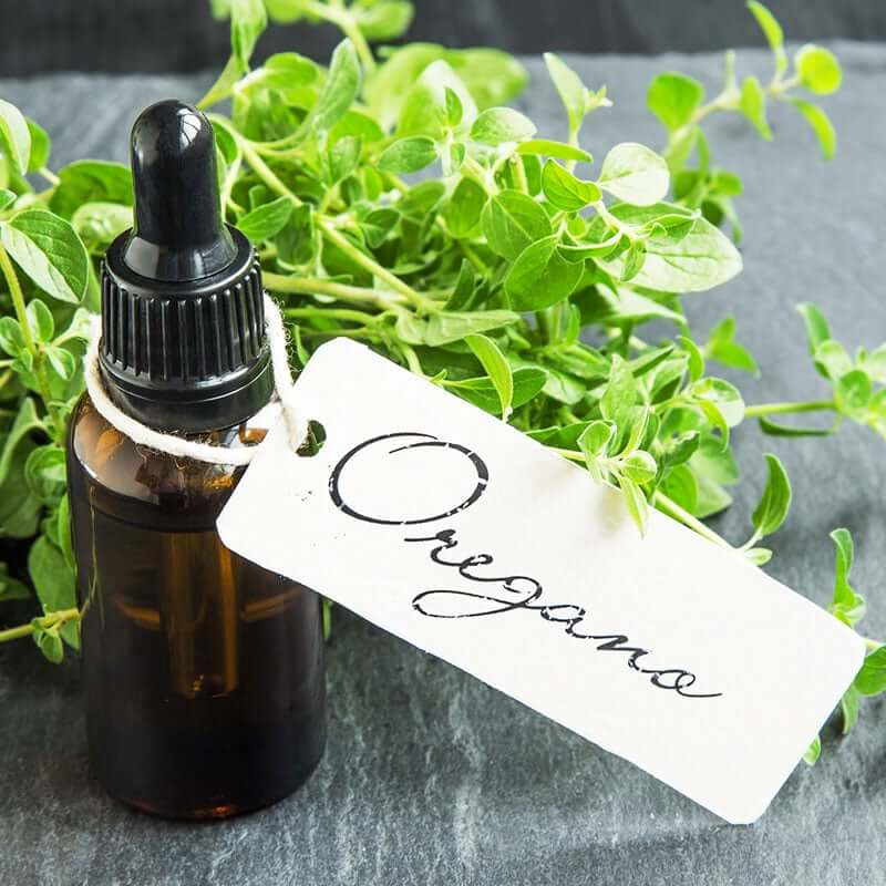 Oregano Essential Oil: 6 Healing Benefits & So Much More!