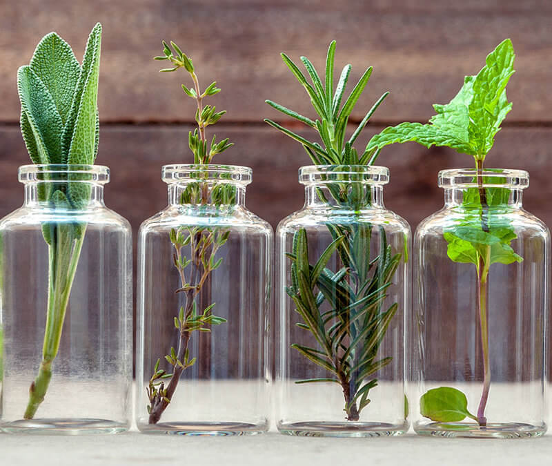 How to Distill Essential Oils – Learn Tips to Make Your Own