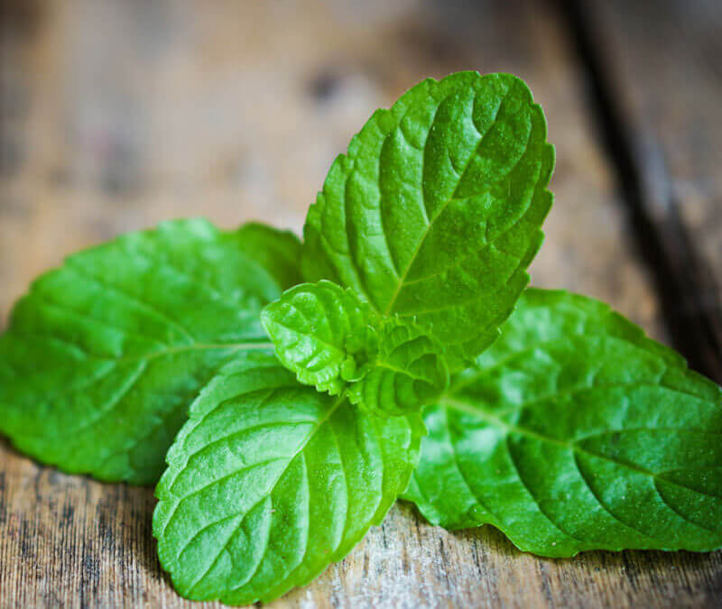 Peppermint Essential Oil Uses: 10 Uses To Live By!
