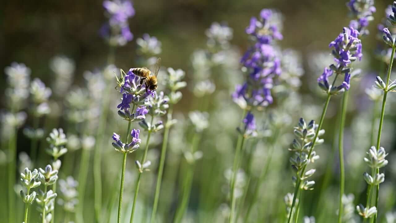 How to Build a Pollinator Garden