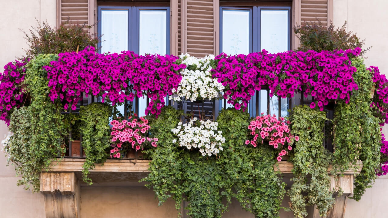 Stunning Hanging Baskets and Container Gardening Tips