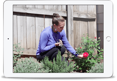 Aroma Garden iPad Image