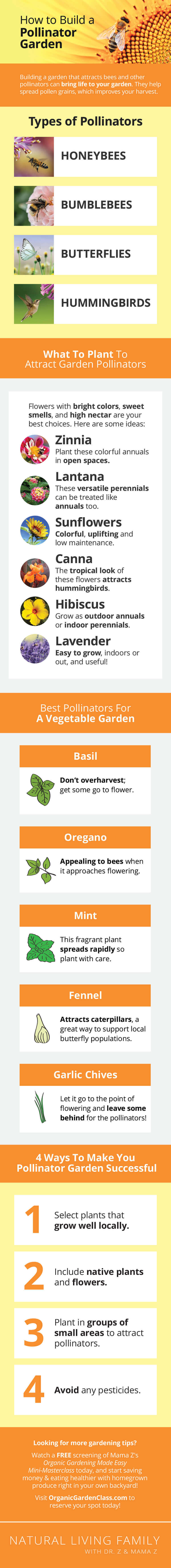 How to Build a Pollinator Garden - Plant List, Growing Tips and more!
