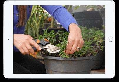 Deck Garden iPad Image