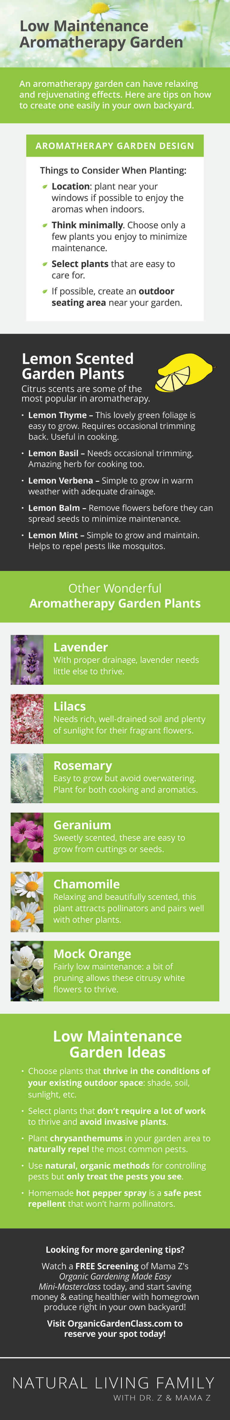Low Maintenance Aromatherapy Garden Design and Plant List Infographic